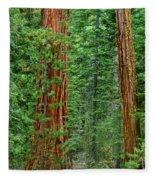 Giant Sequoias Sequoiadendron Gigantium Yosemite Np Ca Fleece Blanket