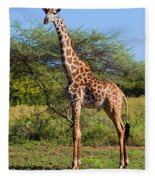 Giraffe On Savanna. Safari In Serengeti Fleece Blanket