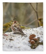 Give Me A Kiss. Redpolls And Greenfinches Fleece Blanket