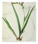Gladiolus Cardinalis Fleece Blanket