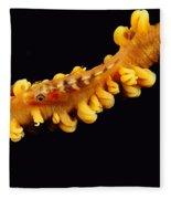 Goby Fleece Blanket