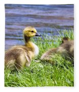 Golden Fluff Fleece Blanket