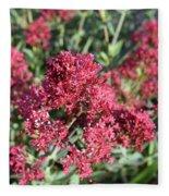 Gorgeous Cluster Of Red Phlox Flowers In A Garden Fleece Blanket