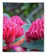 Gorgeous Waratah -floral Emblem Of New South Wales Fleece Blanket