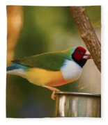 Gouldian Finche Fleece Blanket