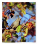 Gray Catbird Framed By Fall Fleece Blanket