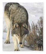 Gray Wolf Fleece Blanket