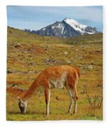 Grazing Guanaco In Patagonia Fleece Blanket
