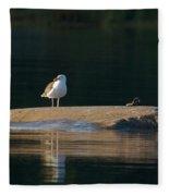 Great Black-backed Gull  Fleece Blanket
