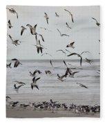 Great Gull Group On The Beach Fleece Blanket