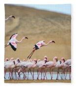 Greater Flamingos Phoenicopterus Fleece Blanket