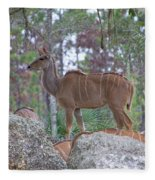 Greater Kudu Female - Rdw002756 Fleece Blanket