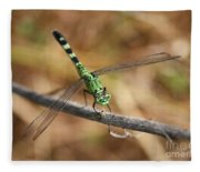 Green Dragonfly On Twig Fleece Blanket