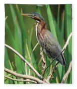Green Heron At The Governor's Palace Gardens Fleece Blanket