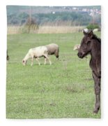 Grey Foal On Pasture Farm Scene Fleece Blanket