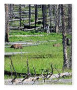 Grizzly Bear And Cub Cross An Area Of Regenerating Forest Fire Fleece Blanket