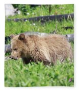 Grizzly Bear Cub In Yellowstone National Park Fleece Blanket