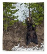 Grizzly Shaking A Tree Fleece Blanket