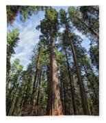 Grove Of Big Trees Fleece Blanket