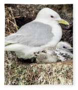 Gull Adult And Chick On Cliff Fleece Blanket