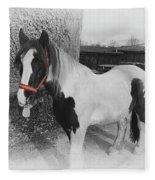 Gypsy Horse Fleece Blanket