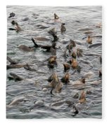 Happy Sea Lions In Santa Cruz Fleece Blanket