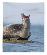 Harbour Seal Fleece Blanket