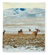 Harem Fleece Blanket