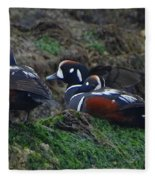 Harlequin Ducks  Fleece Blanket