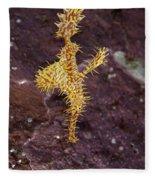Harlequin Ghost Pipefish - Solenostomus Paradoxus Fleece Blanket