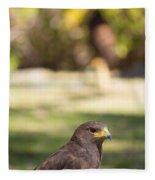 Harris Hawk Looking At Infinity Fleece Blanket