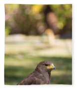 Harris Hawk Looking At Infinity Fleece Blanket