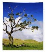 Hawaii Koa Tree Fleece Blanket