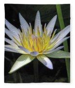 Hawaiian Water Lily 05 - Kauai, Hawaii Fleece Blanket