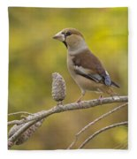 Hawfinch Coccothraustes Coccothraustes Fleece Blanket