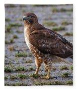 Hawk On A Walk Fleece Blanket