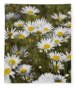 He Loves Me Daisies Fleece Blanket