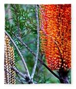 Heath Banksia From Fairfax Walk Fleece Blanket