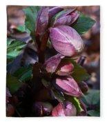 Heliborus Early Flower Buds 1 Fleece Blanket