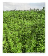 Hemp Plantation Fleece Blanket