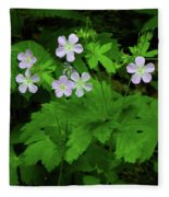 Herb Robert On The Ma At Fleece Blanket