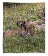 Herd Of Bighorn Sheep Fleece Blanket