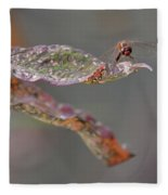 Here's Lookin' At You- Dragonfly Fleece Blanket