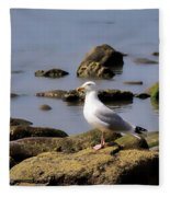 Herring Gull At Charmouth Fleece Blanket