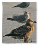Herring Gull  Fleece Blanket