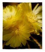 High Angle View Of Cactus Flowers Fleece Blanket