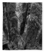 Hoh Rain Forest 3406 Fleece Blanket