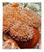 Home Of The Clown Fish 2 Fleece Blanket