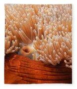 Home Of The Clown Fish 3 Fleece Blanket