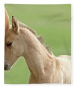 Horse And Colt Fleece Blanket